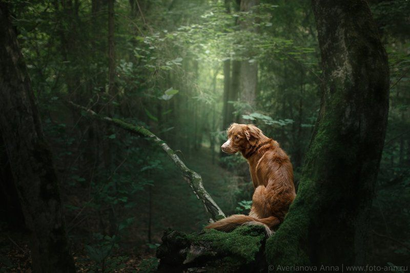 собака, лес, природа photo preview