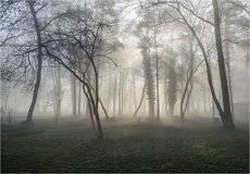 Весенние туманы, утренние..