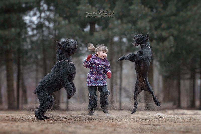 собаки, дети ROCK\'N ROLLphoto preview