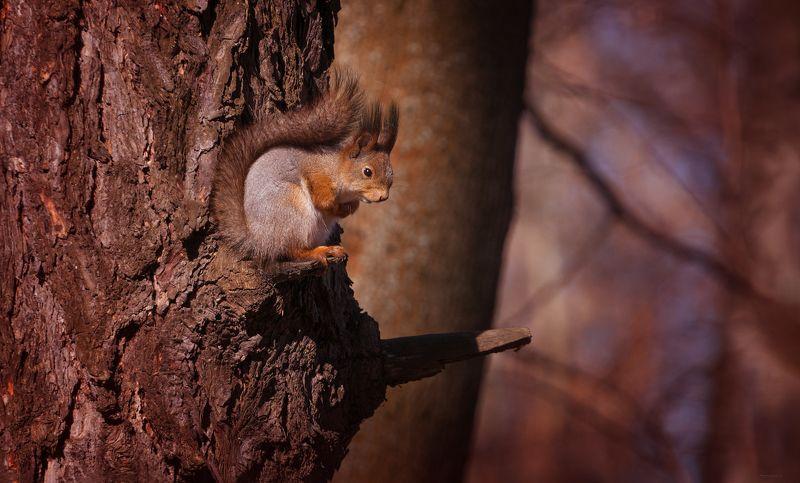 природа, лес, животные На крылечкеphoto preview