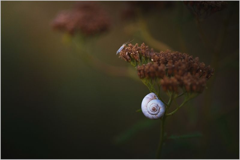 Вечернее. Август СКФО.photo preview