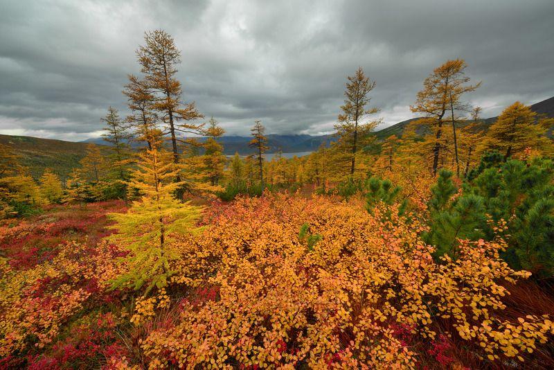 Осень...Мечта...photo preview