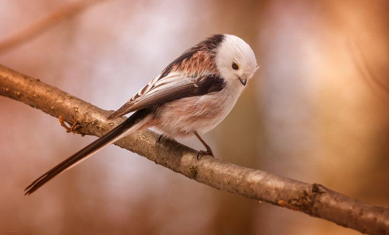 природа, лес, животные, птицы Задумчивостьphoto preview