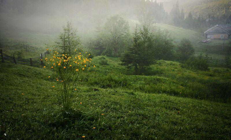 Весеннее утро в Карпатахphoto preview