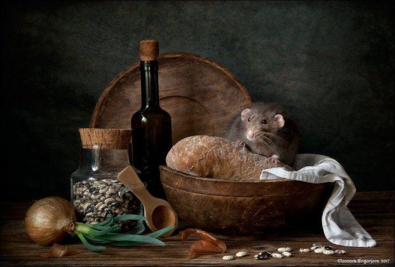 декоративная крыса, дамбо, натюрморт, крысиные истории, хлеб, фасоль, весна, луковица, винтаж, ретро, деревянная посуда Хлеб без сыра - не едаphoto preview