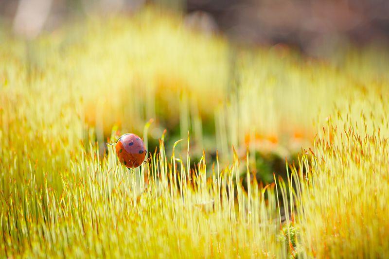 Желтый, Жук, Красный, Лепестки, Мох, Свет, Трава Любопытная особаphoto preview