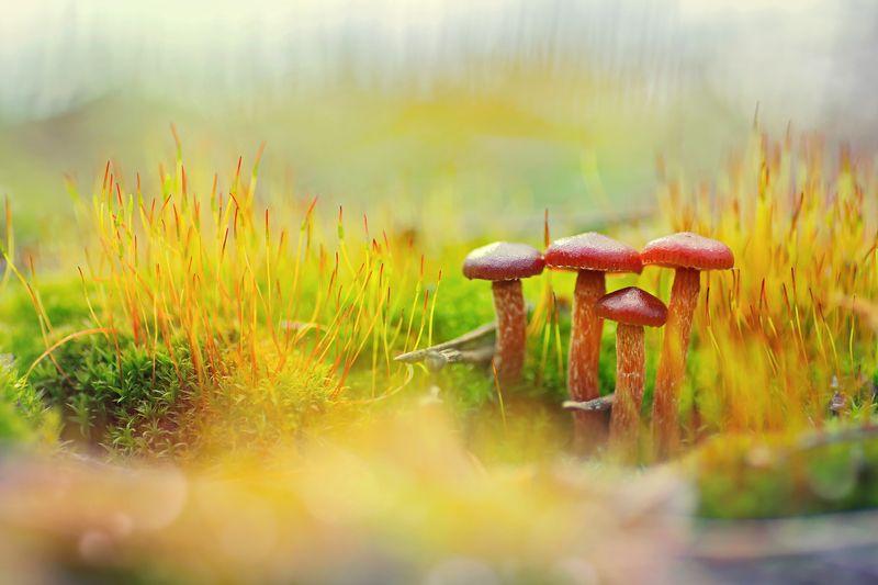 трава,мох,грибы,красный, свет, луч, блики Весенние всходыphoto preview