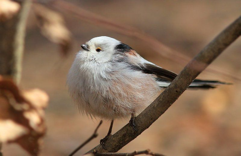 Маленькая,но гордая птичка...photo preview