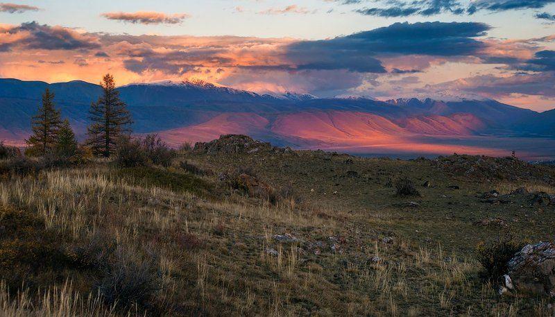 горы, склоны, вечер, свет, тень, лиственницы, курай, курайский хребет, горный алтай, республика алтай Сидя на Курайском холме…photo preview