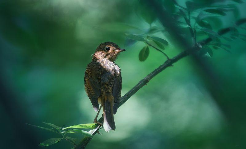 природа, лес, животные, птицы В ожидании мамыphoto preview