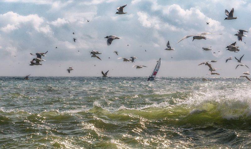 Там где море, чайки и ветерphoto preview