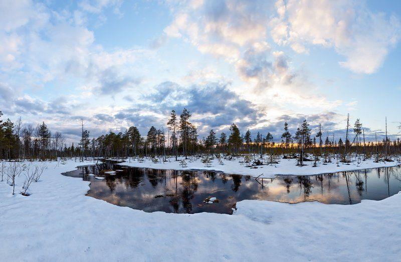 Ленобласть, Ленинградская область, болото, весна, Карельский перешеек \