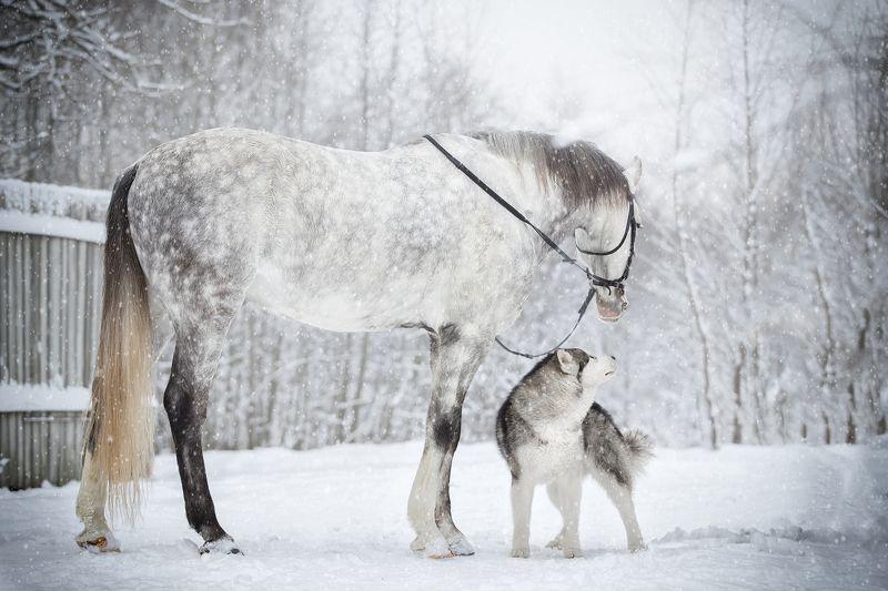 лошадь, собака, зима, серый, любрвь Дружбаphoto preview
