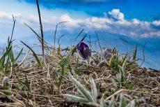 весна на плато Лагонаки