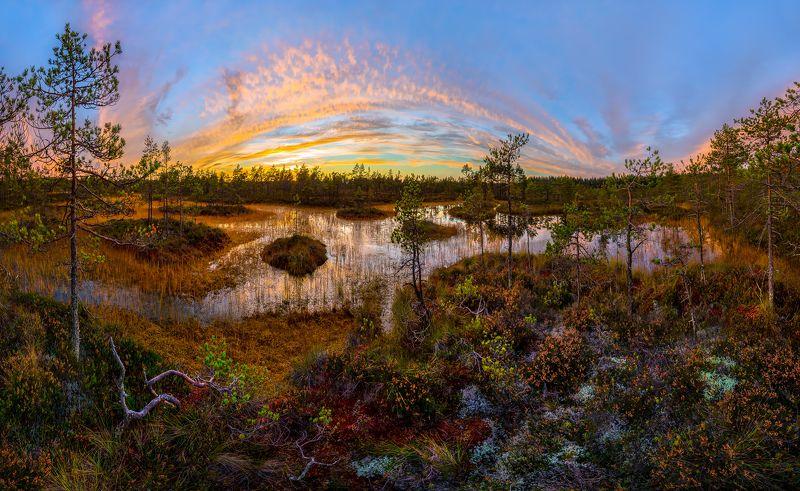 ленинградская область, болото, осень, фототур, сосны, осень, сумерки, закат, мох. Осенний ковёр.photo preview
