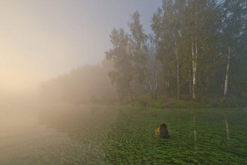 лето август озеро новое природа пейзаж Лето. Август. Озеро цвета - малахитphoto preview