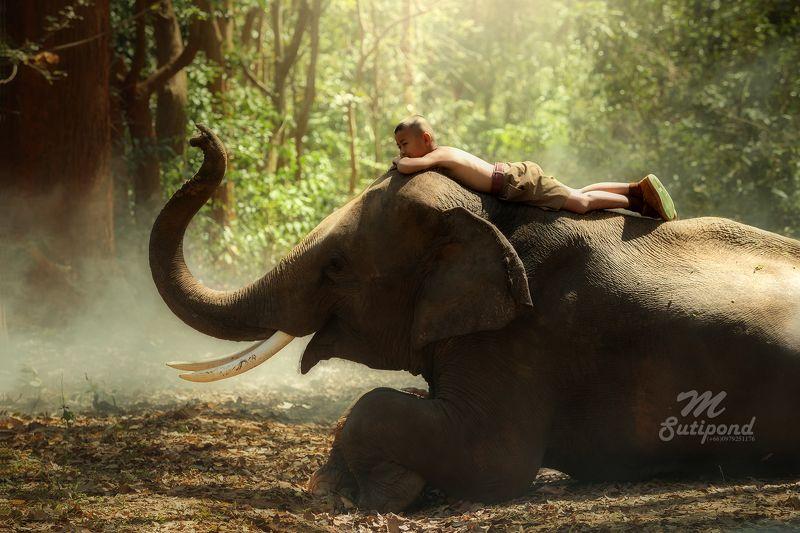elephant,child,boy,sleep,thailand,portrait,person, Friendsphoto preview