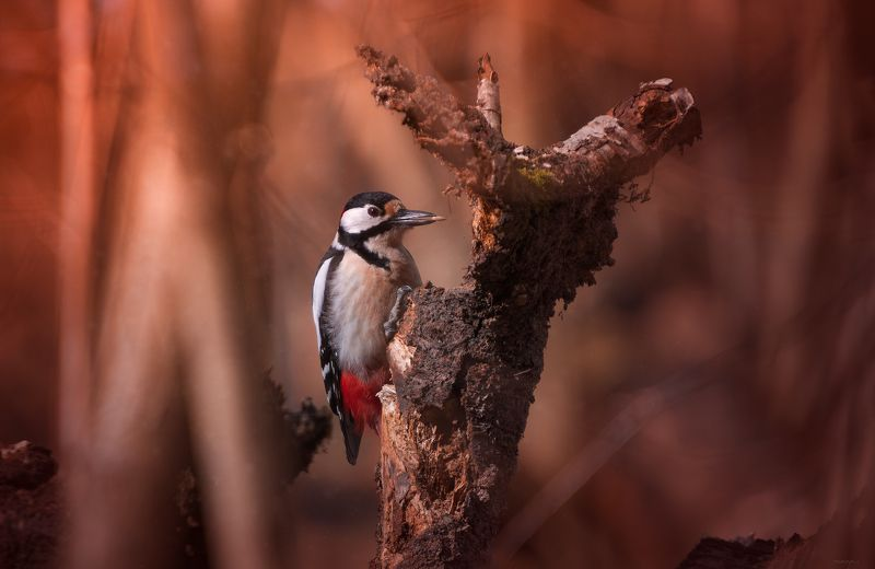 природа, лес, животные, птицы Лесной труженикphoto preview