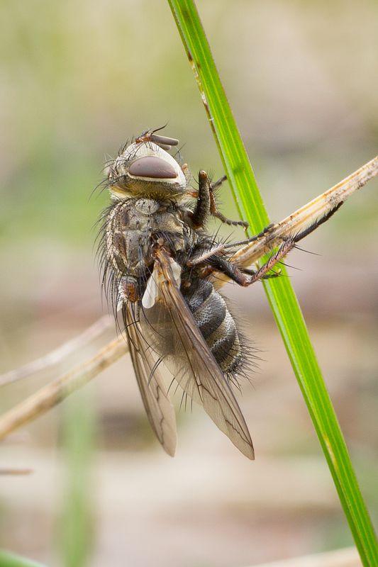 муха, жук, крылья, лист, хобот, свет ***photo preview