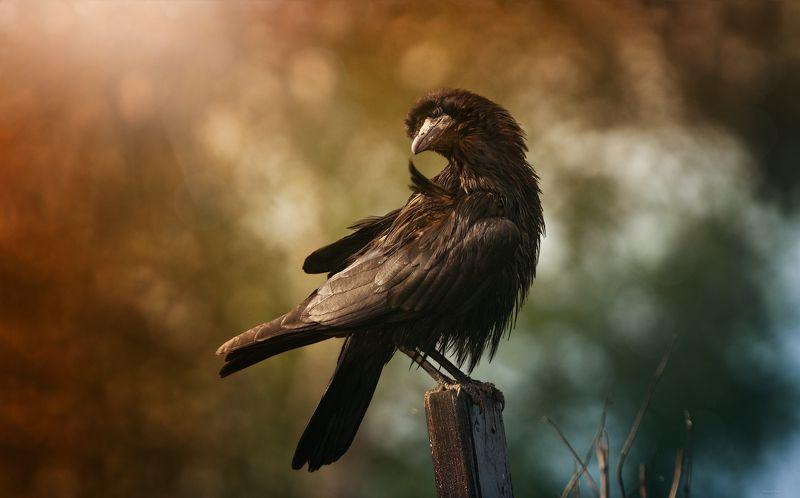 природа, лес, животные, птицы Так-то я грозен ..., просто настроение хорошееphoto preview