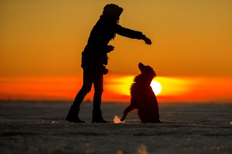 зима, собака, обучение, закат На закате...photo preview