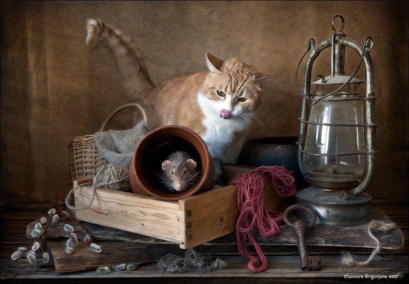 рыжая кошка, декоративная крыса, дамбо, домашние животные, натюркотики, крысиные истории А кто не спрятался - я не виноватаphoto preview
