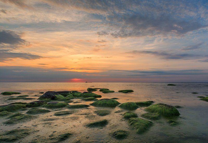 Южный берег Финмкого залива. Белые ночи на Финском заливе.photo preview
