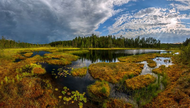 ленинградская область, озеро, гроза, кувшинки, берег, лето. Заболоченное озероphoto preview