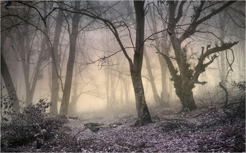 Мистический лес 2photo preview
