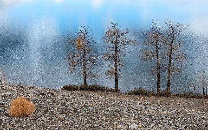 чуйская степь, озеро красногорское, тополя, горный алтай, кош-агач Pro другой Алтай - продолжениеphoto preview