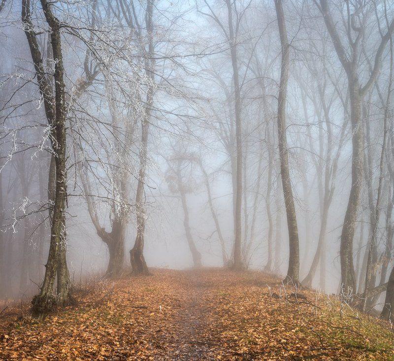 Лес голубого светаphoto preview