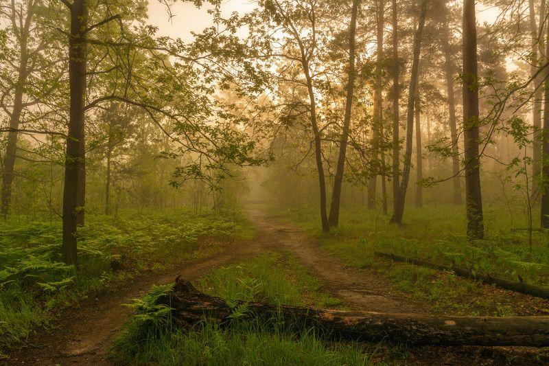 landscape, nature, природа, пейзаж, лес, деревья, папоротник, тропинка, туман, утро весенние туманыphoto preview