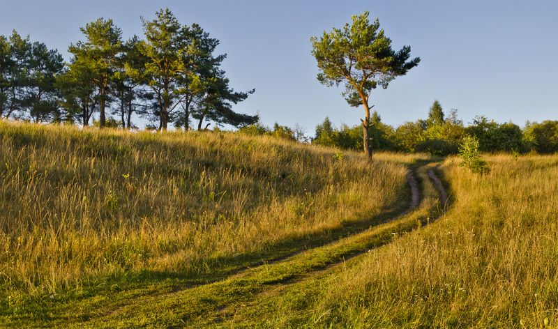 nevant60 березуцкий _александр природа красота пейзаж брянск Перелескиphoto preview