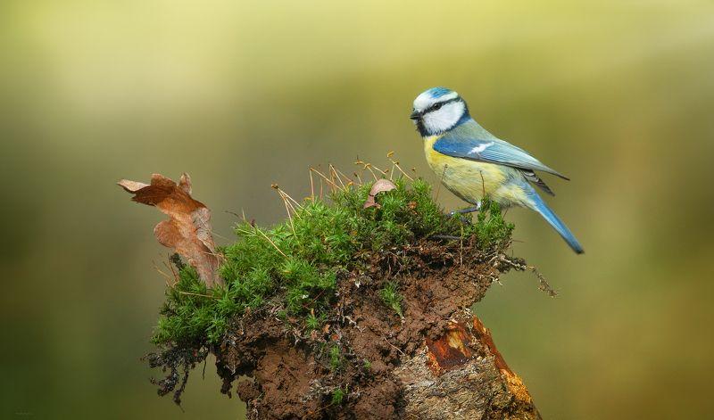 природа, лес, животные, птицы Вот я какаяphoto preview