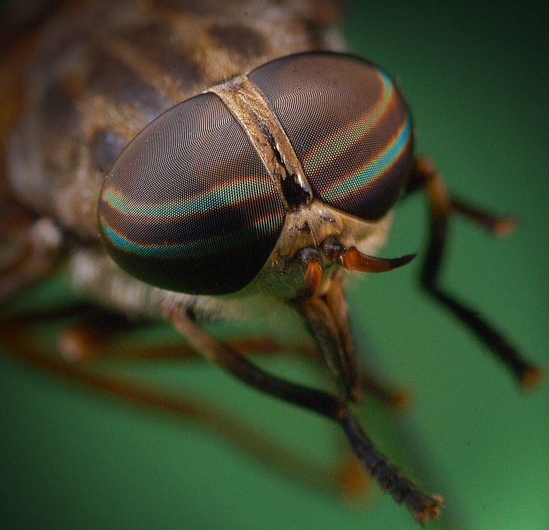Макро, насекомое, пиксели Sunglasses (Chanel, Paris)photo preview