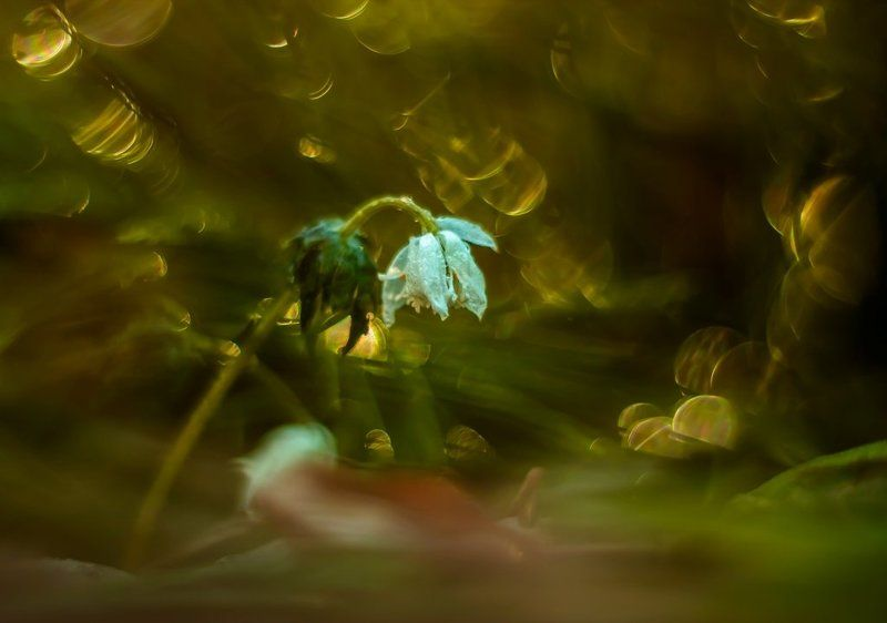 Весна шагает по планете.photo preview