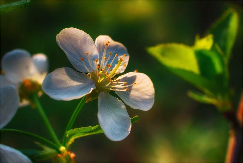 nature, природа,цветы, дерево, ветки, листья,  весна, солнечный свет весенние мотивыphoto preview