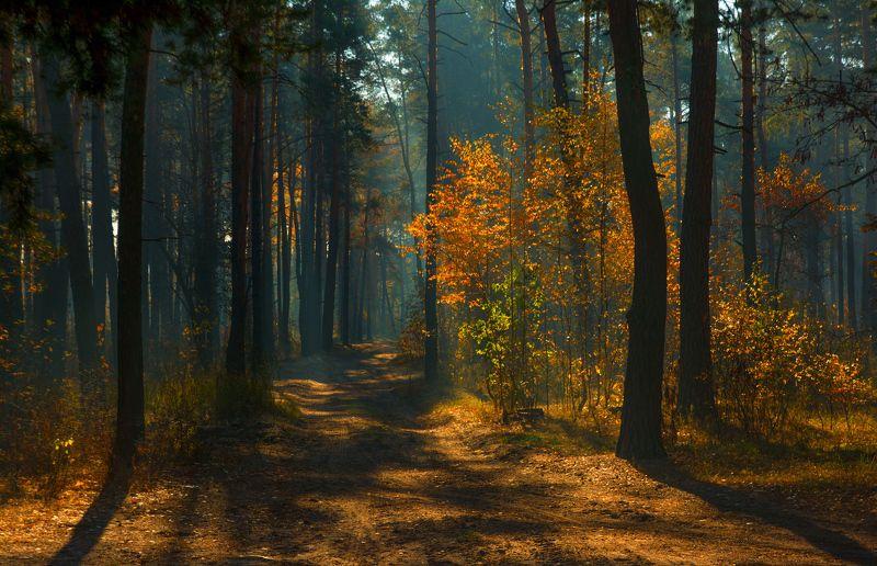 landscape, природа, пейзаж, осень, осенние краски, лес, деревья, солнечный свет, солнечные лучи, прогулка в осеньphoto preview