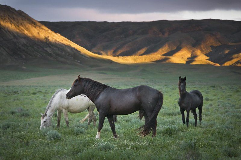 пейзаж, горы, лошади, horses, Казахстан, Мангистау, Мангышлак, landscape, mountains, Kazakhstan, Mangistau Идиллия / Idyllphoto preview