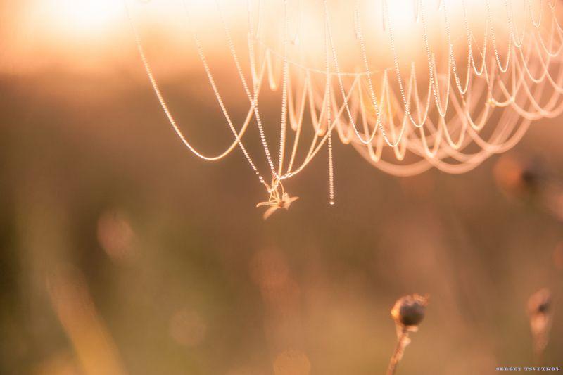утро, рассвет, природа, паутина, комар Попался, который кусалсяphoto preview