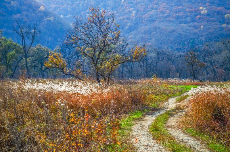 Дорога, дерево, Приморье, Приморский край Приморский пейзажphoto preview