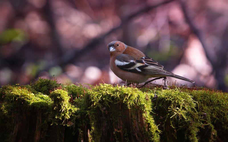 природа, лес, животные, птицы Мальчик в поискеphoto preview
