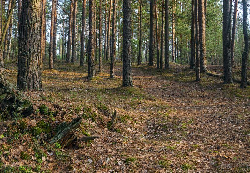 лес,пейзаж,александр березуцкий, Весенний лесphoto preview