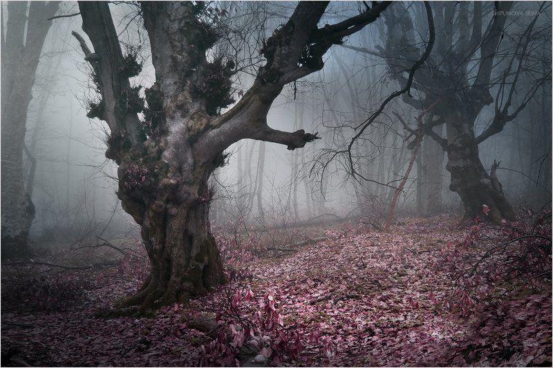 Мистический лес 3photo preview