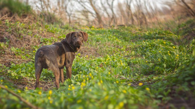 собака, животное, трава, ветки, весна, цветы Мой лучший другphoto preview