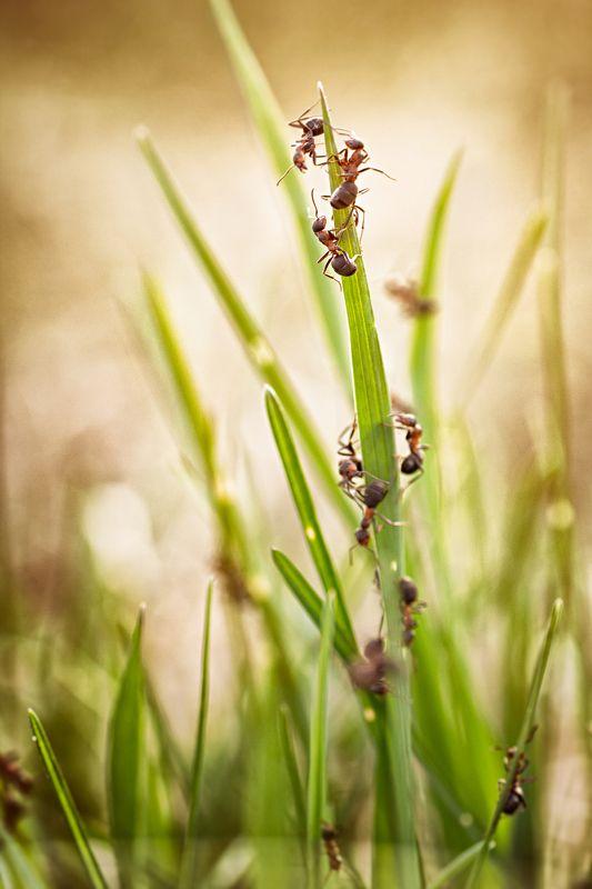 муха, жук, крылья, лист, хобот, свет, муравей, мошки, трава Весеннее обострениеphoto preview