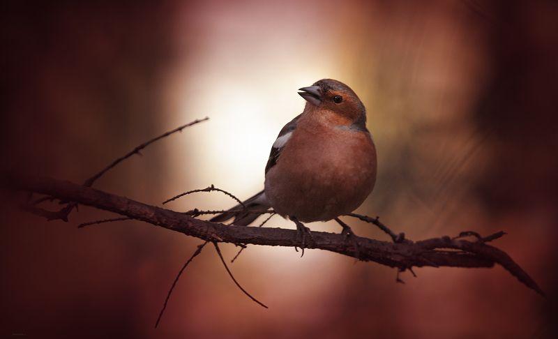 природа, лес, животные, птицы Утренний подиумphoto preview