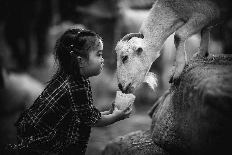 kid, child, girl, farmyard, goat, eyes, farmyard nurseryphoto preview