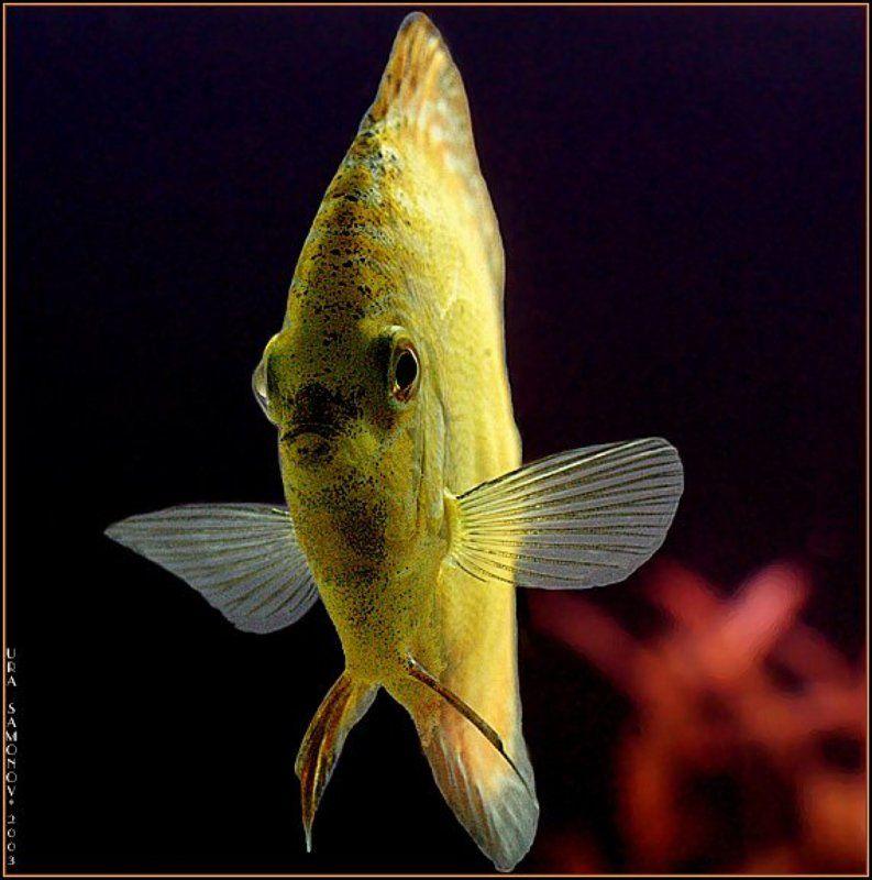 животный подводный мир приветphoto preview