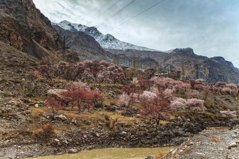 Весна в горах. Кишлак Пете. Согдийская область. Таджикистанphoto preview